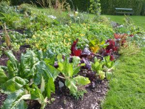 légumes de saison et régionaux, résistants et généreux